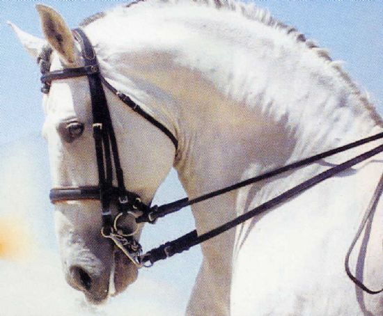 Dressage bridles - English & European bridles